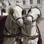 Machen Sie mit uns eine Führung durch das romantische Wien